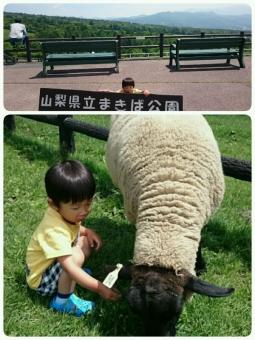 まきば公園で餌やり