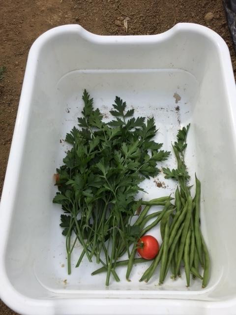 0616収穫