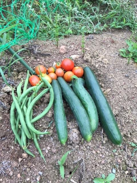 0701収穫