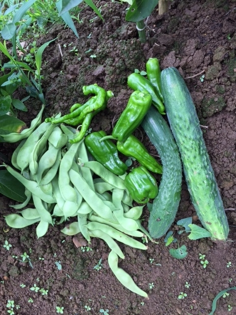 0705収穫