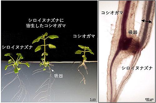 寄生虫より怖い寄生植物