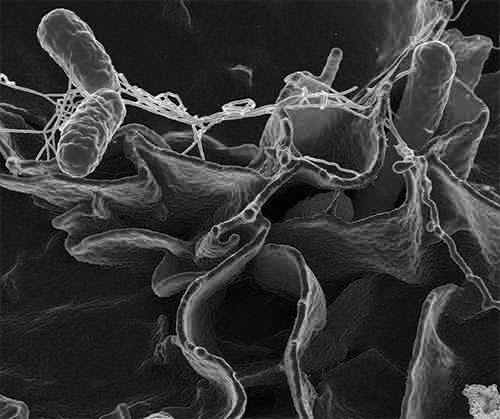 人間の影響を受けた細菌が自然界に拡散している