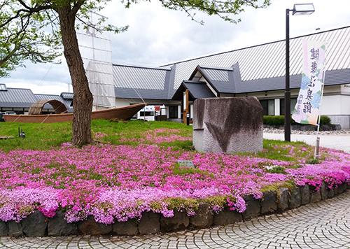 H29芝桜3