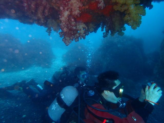 170503-diver.jpg