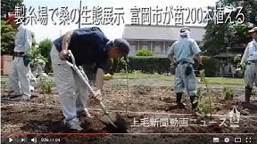 製糸場で桑の生態展示 富岡市が苗200本植える