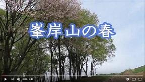 峯岸山(みねぎしやま)の春