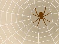 蜘蛛の世界へようこそ