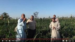 JICAの協力 エジプト編 小規模農家支援