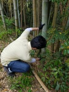 170507竹伐り