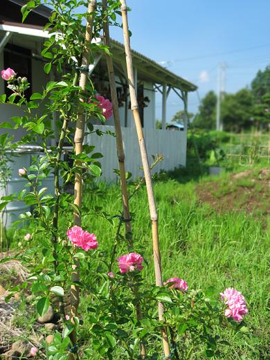 2017_7月の庭3