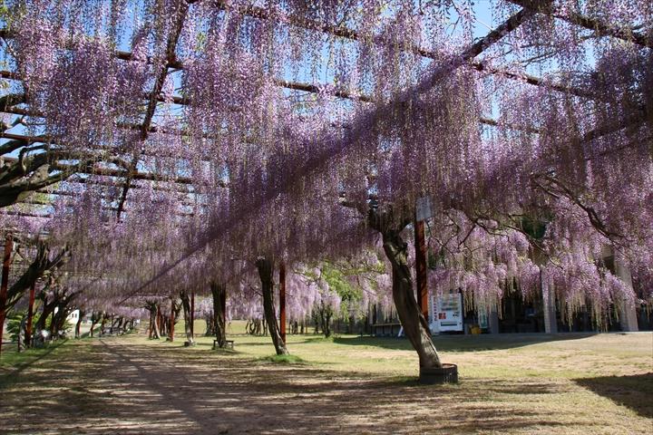 ふじ公園2