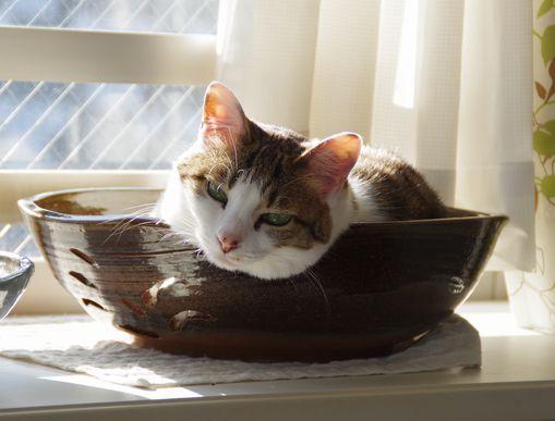 猫皿後編③