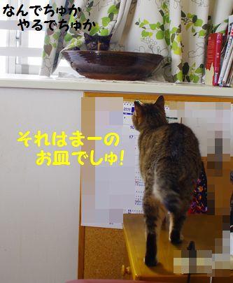 20160903173946bdd猫皿