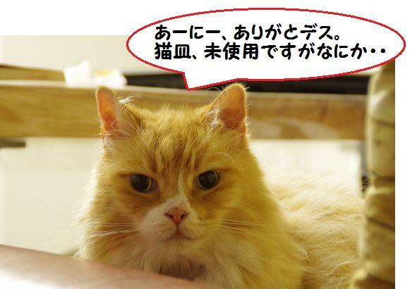 猫皿後編⑧