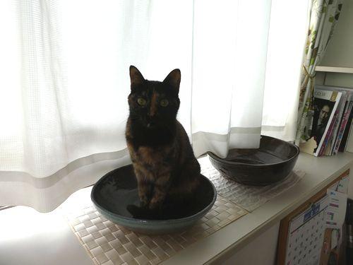 猫皿その後①