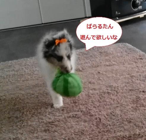 MOV_2970(4).jpg