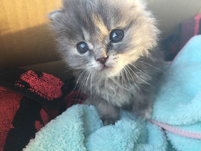 生後3週間の子猫