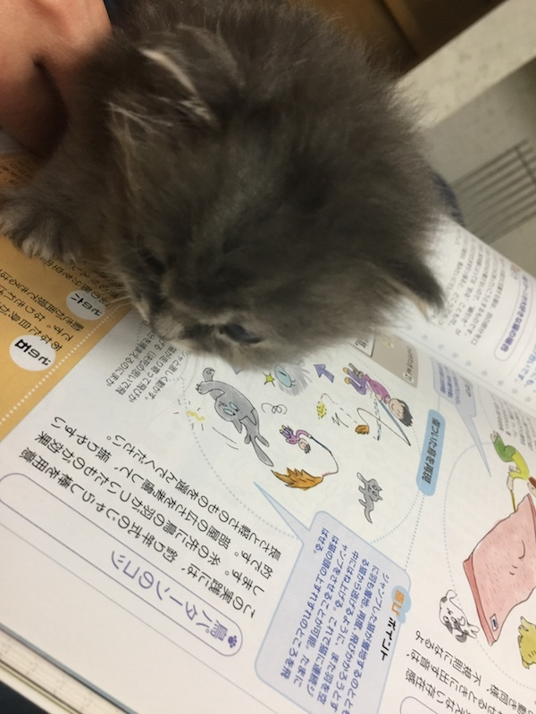 ねこのきもちという本を読む子猫ちゃん