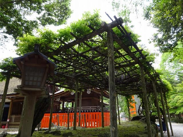 17,5,3 上賀茂神社 (4)