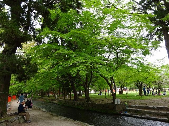 17,5,3 上賀茂神社 (7)
