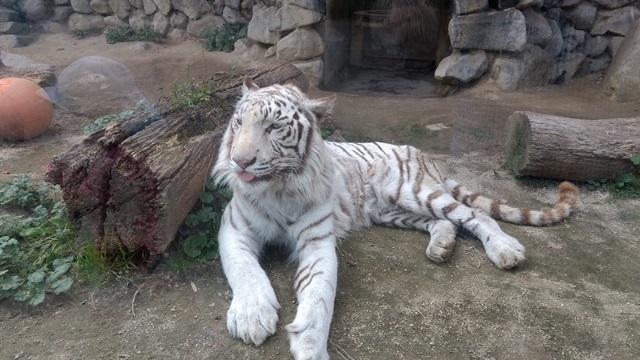 東武動物公園022