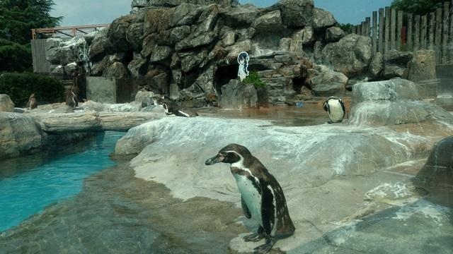 東武動物公園027