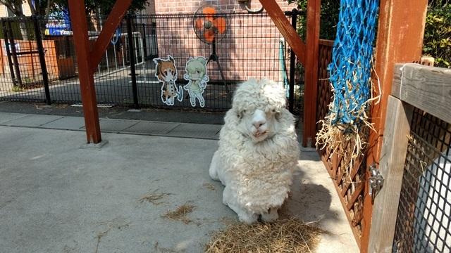 東武動物公園029