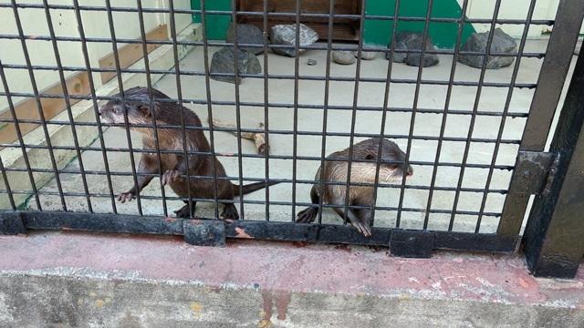 東武動物公園033