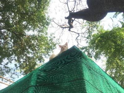 タイのヲソト猫179★屋根猫