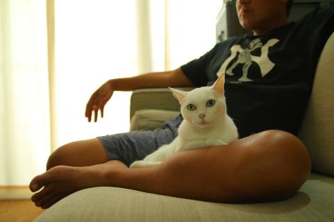 温玉★膝猫