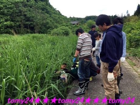 20170604田沢川清掃 (6)