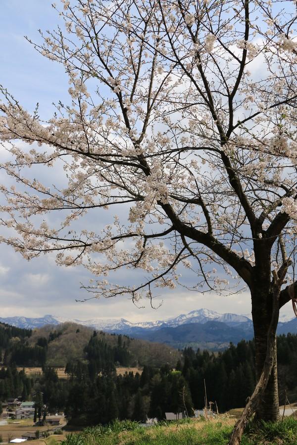 春の妖精Ⅱ
