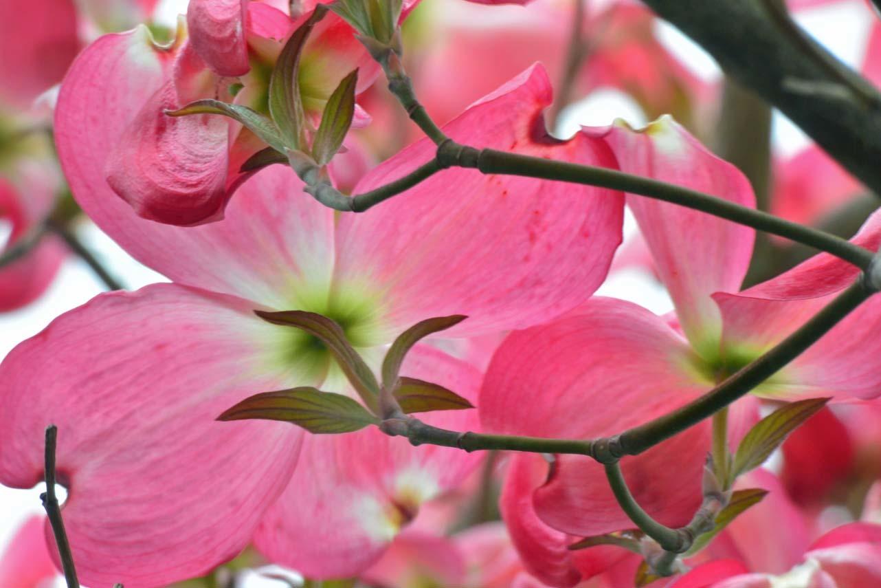 DSC_0207庭の花