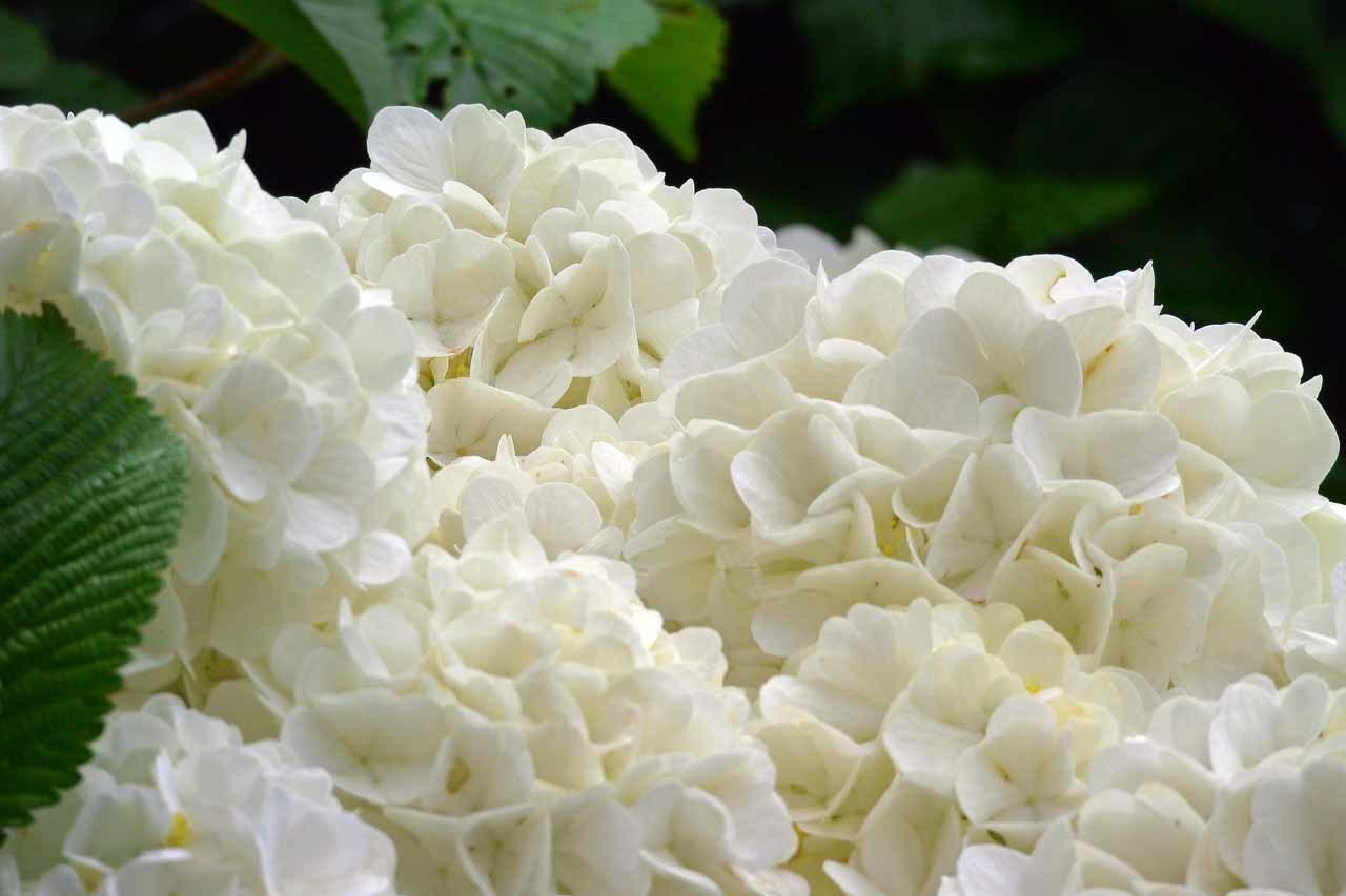 DSC_0196庭の花