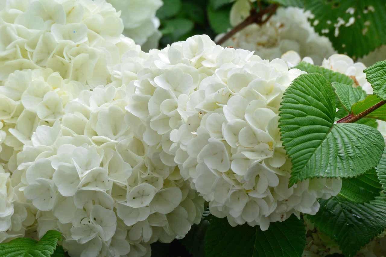 DSC_0178庭の花