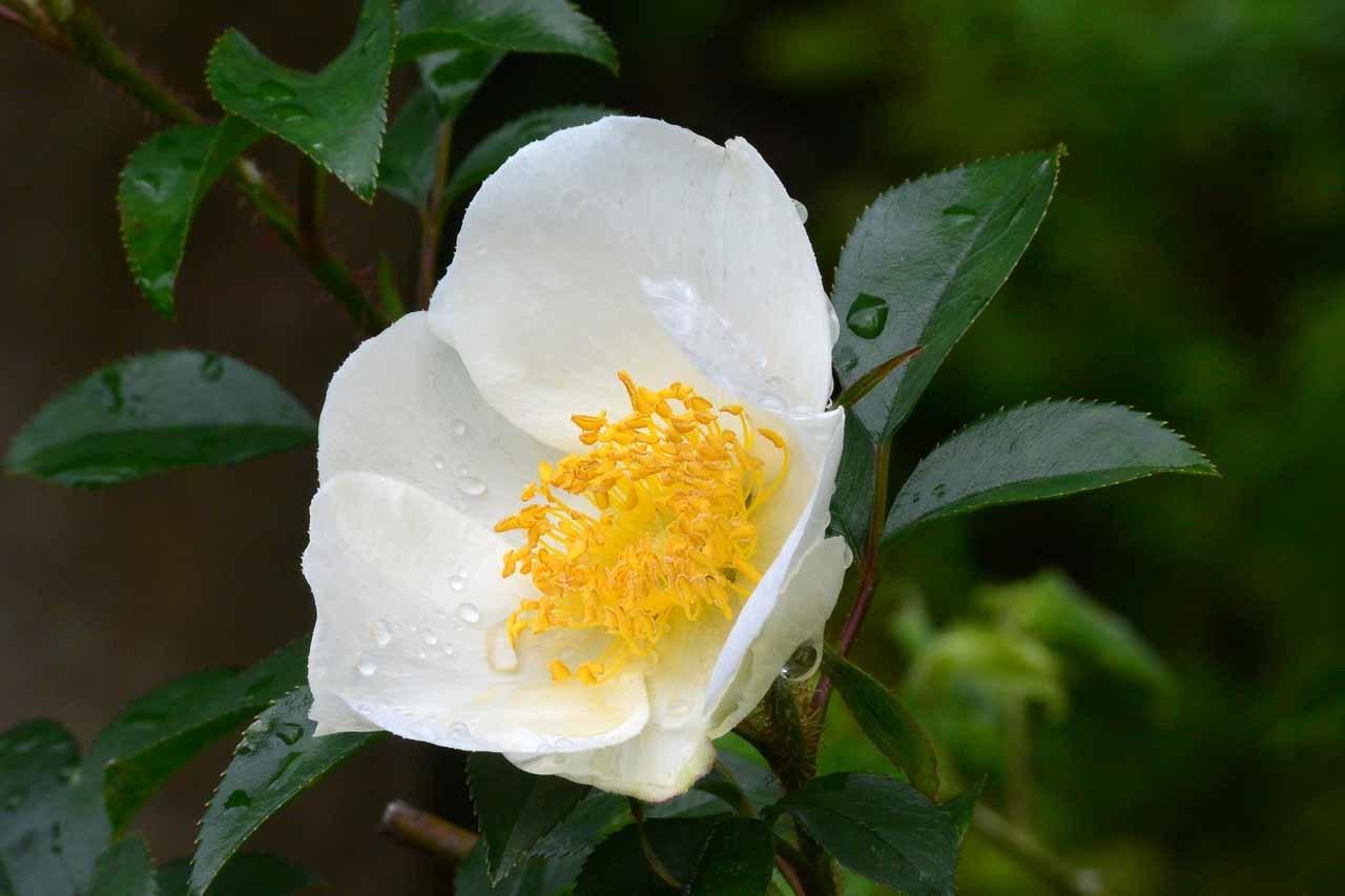 DSC_0242庭の花