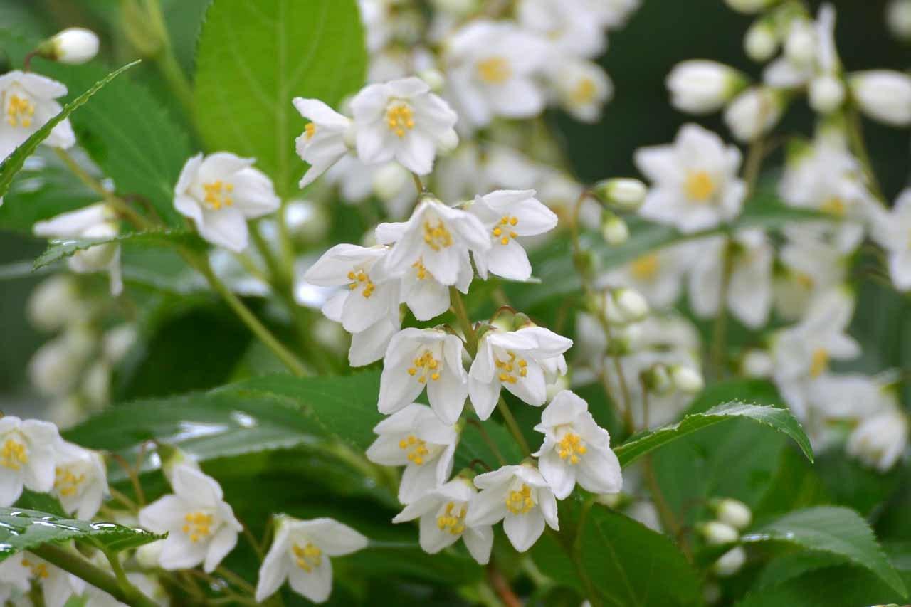 DSC_0272庭の花