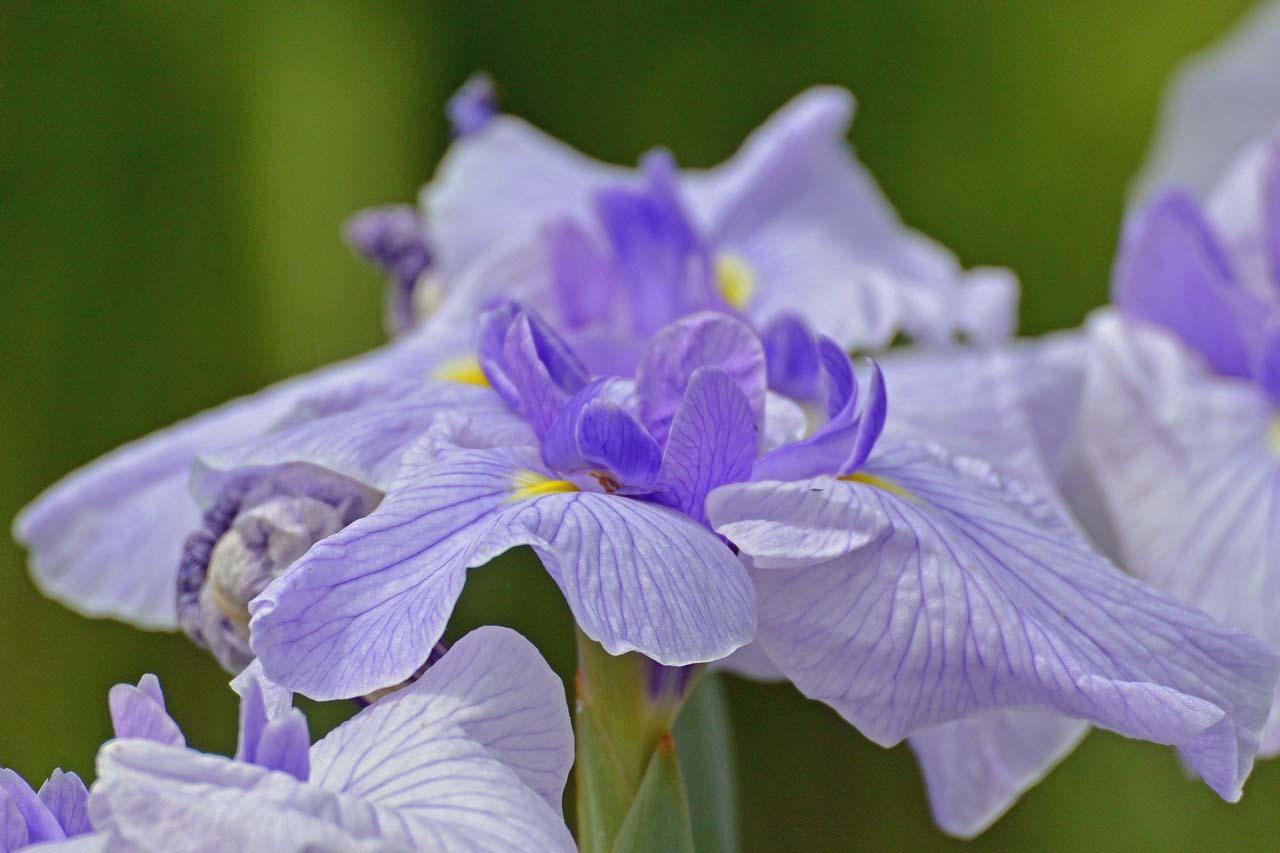 _DSC3117初夏の花