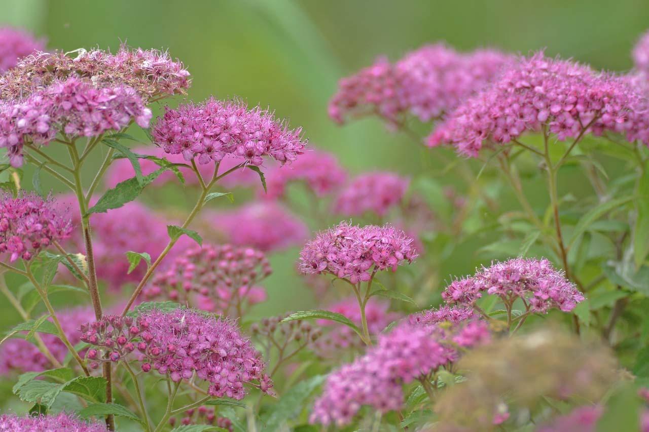 _DSC4000初夏の花