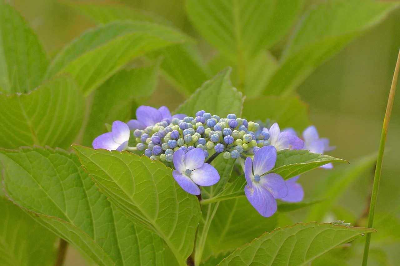 _DSC3975初夏の花