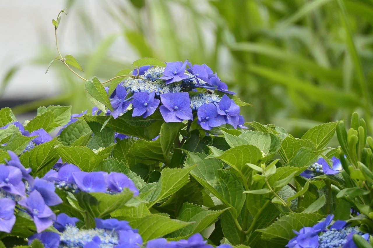 _DSC3973初夏の花