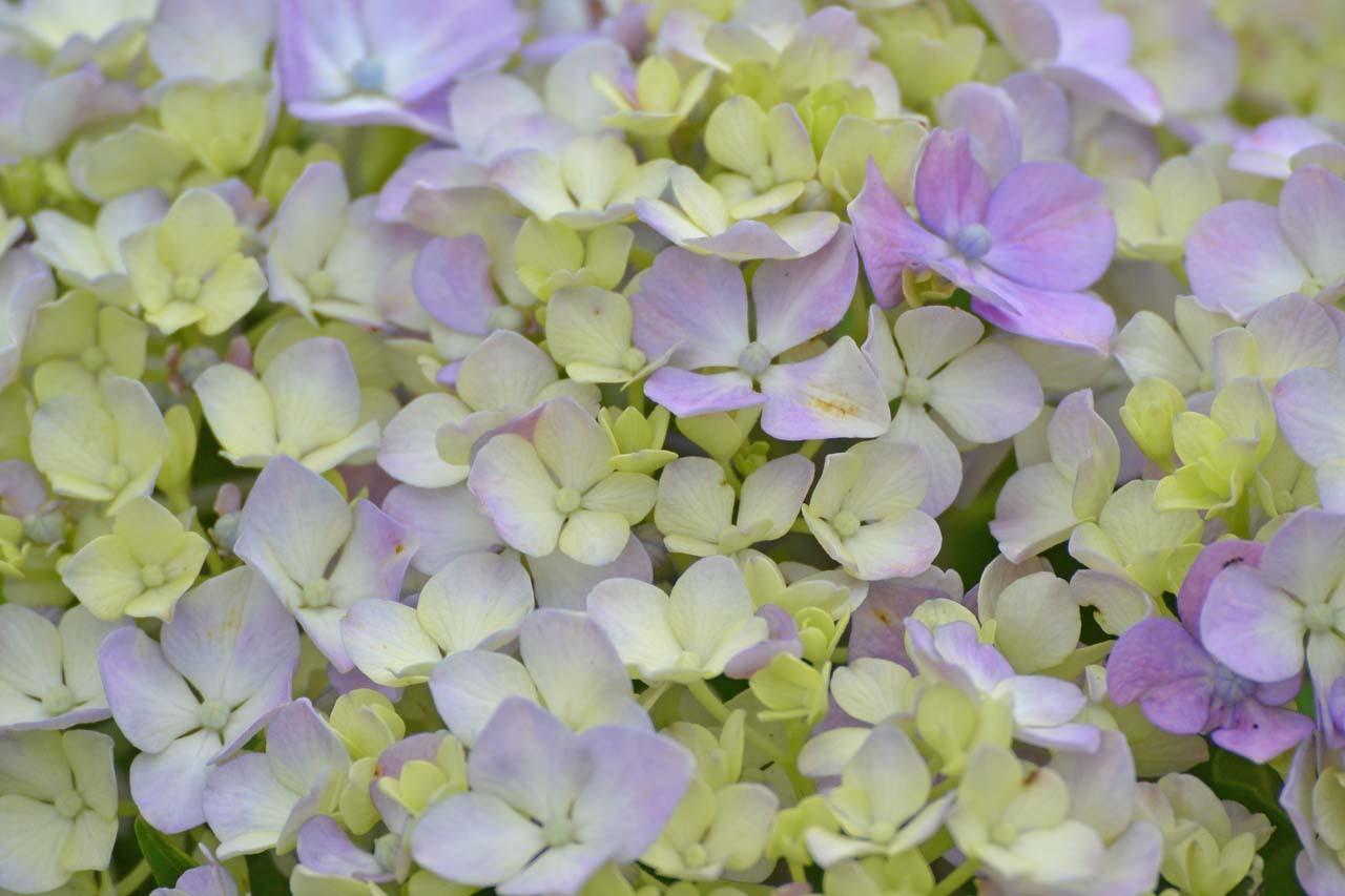 _DSC3984初夏の花