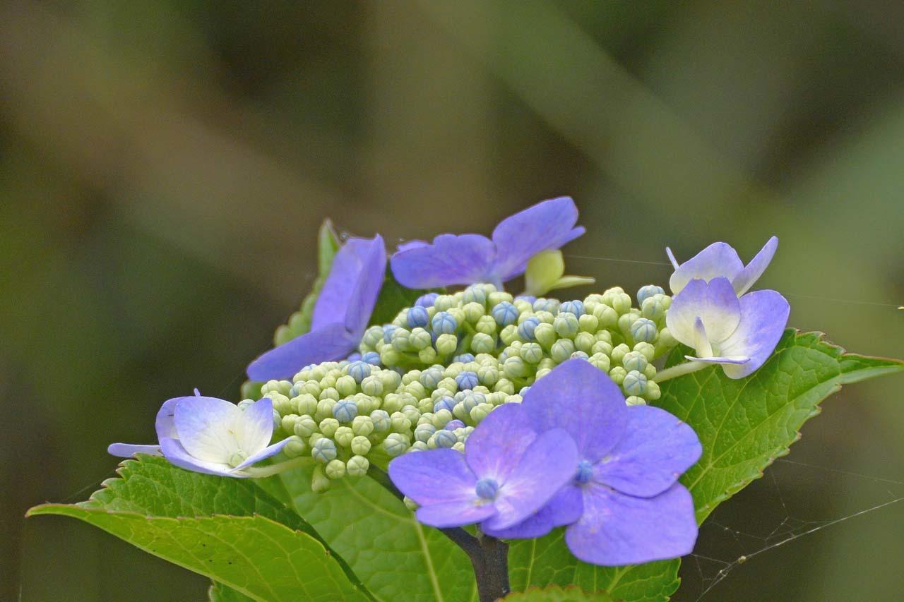 _DSC3991初夏の花