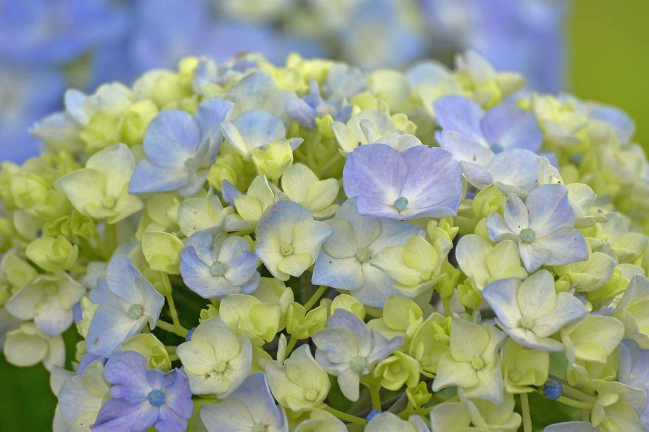 _DSC3988初夏の花