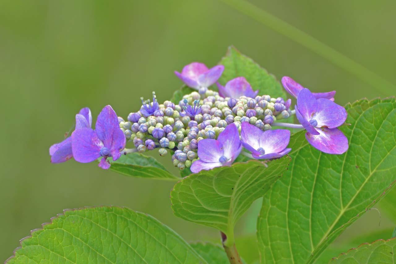 _DSC3994初夏の花