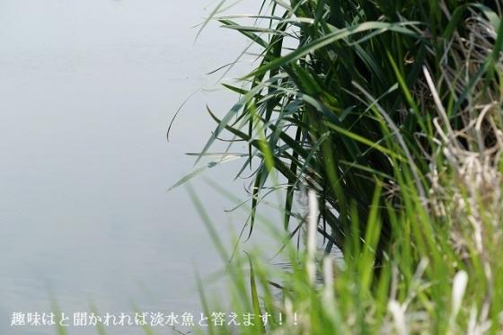 170429-01 JA徳島北周辺1 -01[α99 SAL100M28]