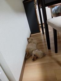 ヘンテコ寝相 (12)
