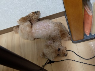ヘンテコ寝相 (5)