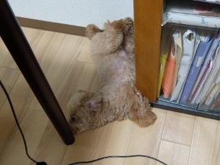 ヘンテコ寝相 (8)
