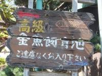 YamatokoriyamaKingyoen_003_org.jpg